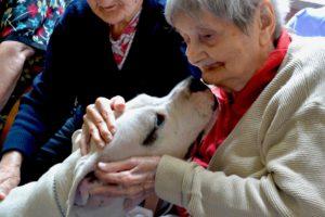 La pet therapy migliora il comportamento sociale dei pazienti con danni cerebrali.