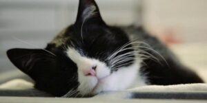 Nella Pet Therapy non partecipano solo i cani ma anche i gatti.