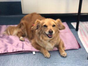 News dalla Pet Therapy Ospedale Buzzi
